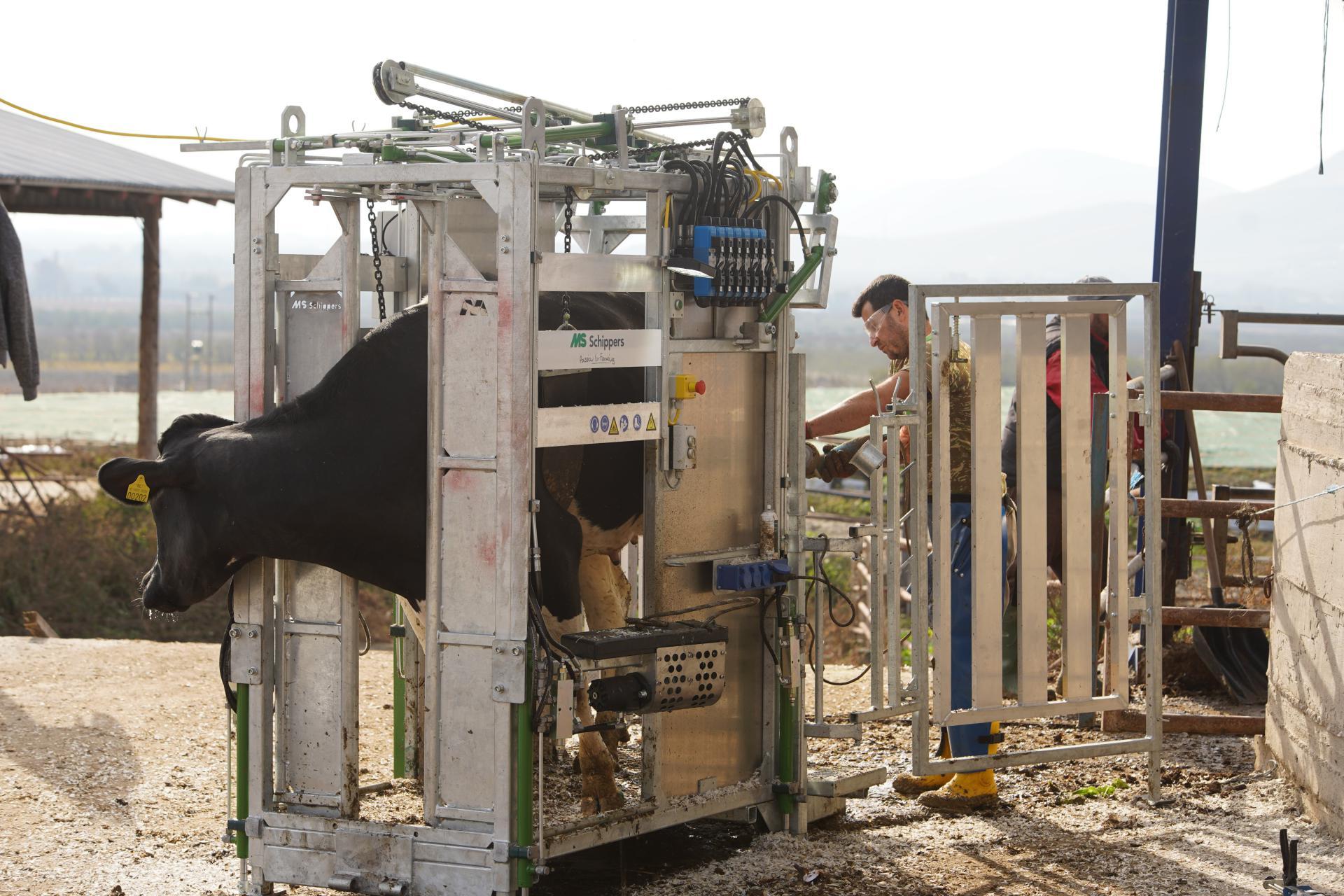 cowfootcare-slide-1